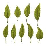 Комплект зеленого цвета выходит на белую предпосылку Стоковые Фотографии RF
