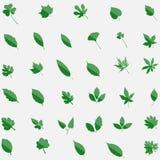 Комплект зеленого цвета 35 значков leavs изолированных на предпосылке плоское самомоднейшее Стоковые Изображения RF