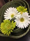 Комплект зеленой корзины с искусственными цветками Стоковое Изображение RF