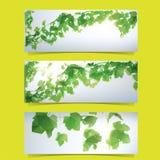 Комплект знамени листвы Стоковое Изображение