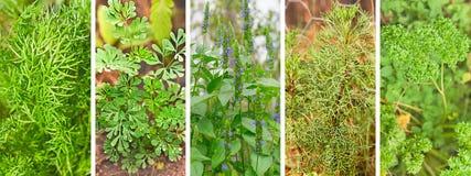 Комплект знамени органических трав сада Стоковое фото RF