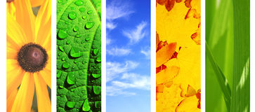 Комплект знамени с элементами природы Стоковое фото RF