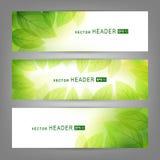 Комплект знамен вектора с свежими зелеными листьями Стоковая Фотография