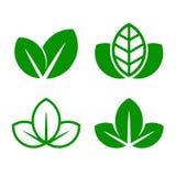 Комплект значка лист зеленого цвета Eco вектор Стоковое Изображение