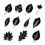 Комплект значка силуэта лист черный Стоковая Фотография RF