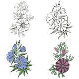 Комплект дизайна вектора цветков Стоковые Фото