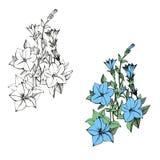 Комплект дизайна вектора цветков Стоковое Фото