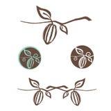 Комплект дизайна логотипа какао Стоковое Фото