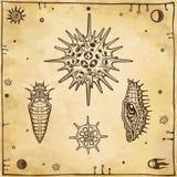 Комплект изображений графика: кукла насекомого, личинка, radiolaria Стоковое Изображение
