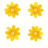 Комплект изолированных желтых gerbera или маргаритки Цветки вектора красочные на белой предпосылке Шаблон для для футболки, мода Стоковые Фото