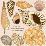 Комплект изолированных значков seashell Стоковое Изображение RF