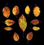 Комплект изолированных листьев осени Стоковое фото RF