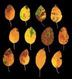 Комплект изолированных листьев осени Стоковое Изображение RF