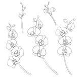 Комплект изолированных орхидей Стоковая Фотография RF