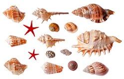 Комплект изолированных seashells Стоковая Фотография RF