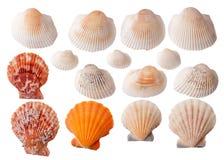 Комплект изолированных seashells Стоковое Изображение RF