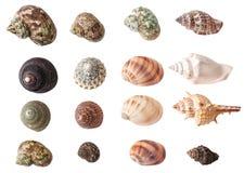 Комплект изолированных seashells Стоковые Изображения