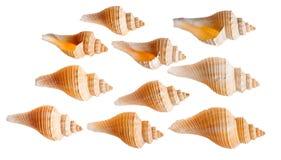 Комплект изолированных seashells Стоковые Фотографии RF