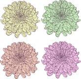 Комплект линейных хризантем чертежа Стоковые Изображения RF
