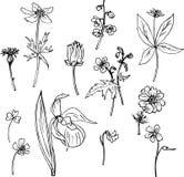 Комплект линии трав чертежа Стоковое Изображение