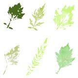 Комплект листьев акварели Стоковые Фотографии RF
