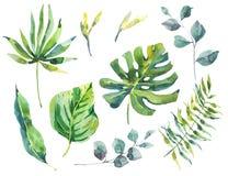 Комплект листьев зеленого цвета акварели тропических Стоковые Фотографии RF