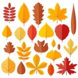 Комплект листьев осени дерева изолированных на белизне Стоковое Изображение