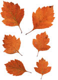 Комплект листьев осени изолированных на белой предпосылке стоковая фотография