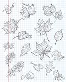 Комплект листьев осени, каштанов, жолудей и калины на предпосылке книги тренировки в клетке Черный контур Стоковая Фотография RF