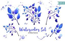 Комплект листьев покрашенных в акварели на белой бумаге Бесплатная Иллюстрация