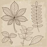 Комплект листьев разного вида, биология, контур, винтажный стиль Листья травы Взгляд листьев Стоковая Фотография RF
