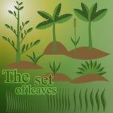 Комплект листьев Стоковое Изображение