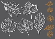 Комплект лист осени Стоковое Изображение RF