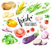 Комплект иллюстрации акварели свежих овощей иллюстрация штока
