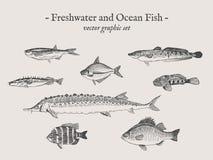 Комплект иллюстрации вектора рыб винтажный Стоковые Фото
