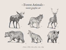 Комплект иллюстрации животных леса винтажный Стоковая Фотография RF