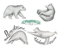 Комплект иллюстрации нарисованной рукой потеха изолированный медведь иллюстрация вектора