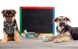 Комплект и canine школы Стоковые Фото