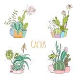 Комплект кактуса в баках изолированных на белой предпосылке Стоковая Фотография
