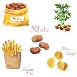 Комплект картошки акварели Стоковое Изображение