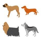 Комплект квартиры собак Стоковые Изображения RF