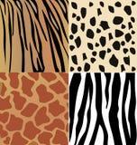 Комплект кожи диких животных  бесплатная иллюстрация