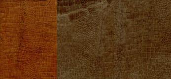 Комплект коричневой текстуры кожи замши крокодила Стоковые Изображения