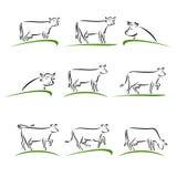 Комплект коровы вектор Стоковое Изображение