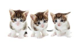 Комплект котят Стоковые Изображения RF