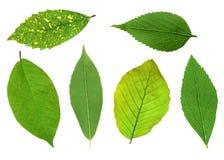 Комплект красивых зеленых листьев весны изолированных на белизне Стоковая Фотография RF