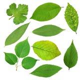Комплект красивых зеленых листьев весны изолированных на белизне Стоковые Фото
