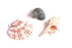 Комплект красивых seashells изолированных на белой предпосылке, Стоковые Изображения RF