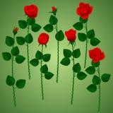 Комплект красных роз на зеленой предпосылке Стоковые Изображения RF