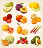 Комплект красочного экзотического плодоовощ иллюстрация штока